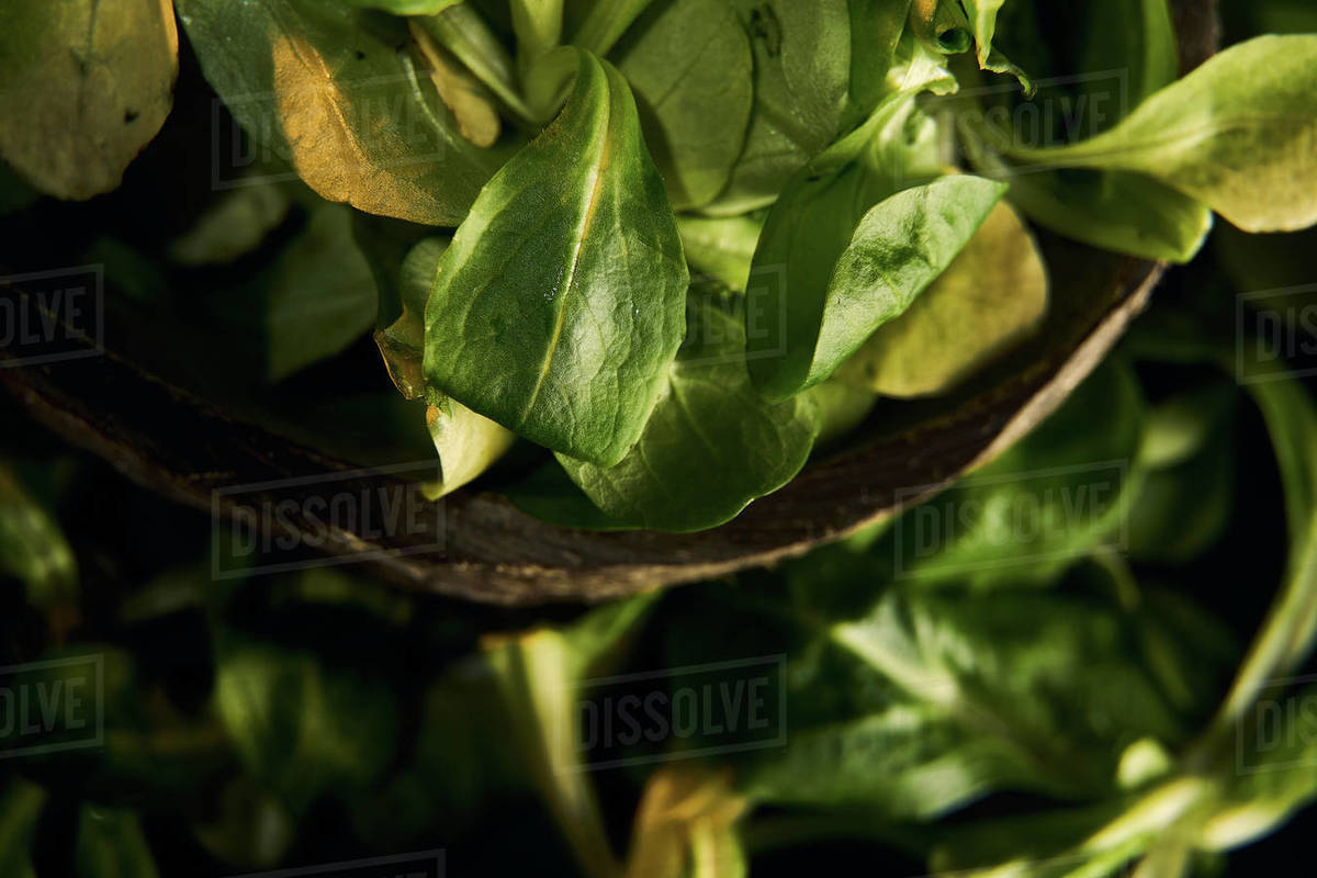 Salad (healthy food) on black background Royalty-free stock photo
