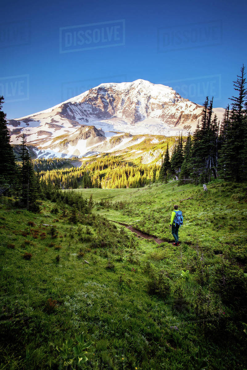 Male hiker walking along a trail at sunrise overlooking Mt Rainier Royalty-free stock photo