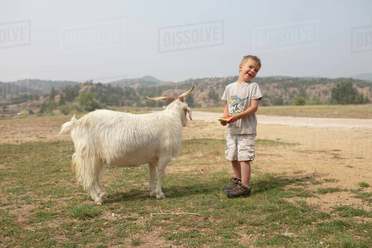 Boy laughing as he feeds his pet goat Royalty-free stock photo