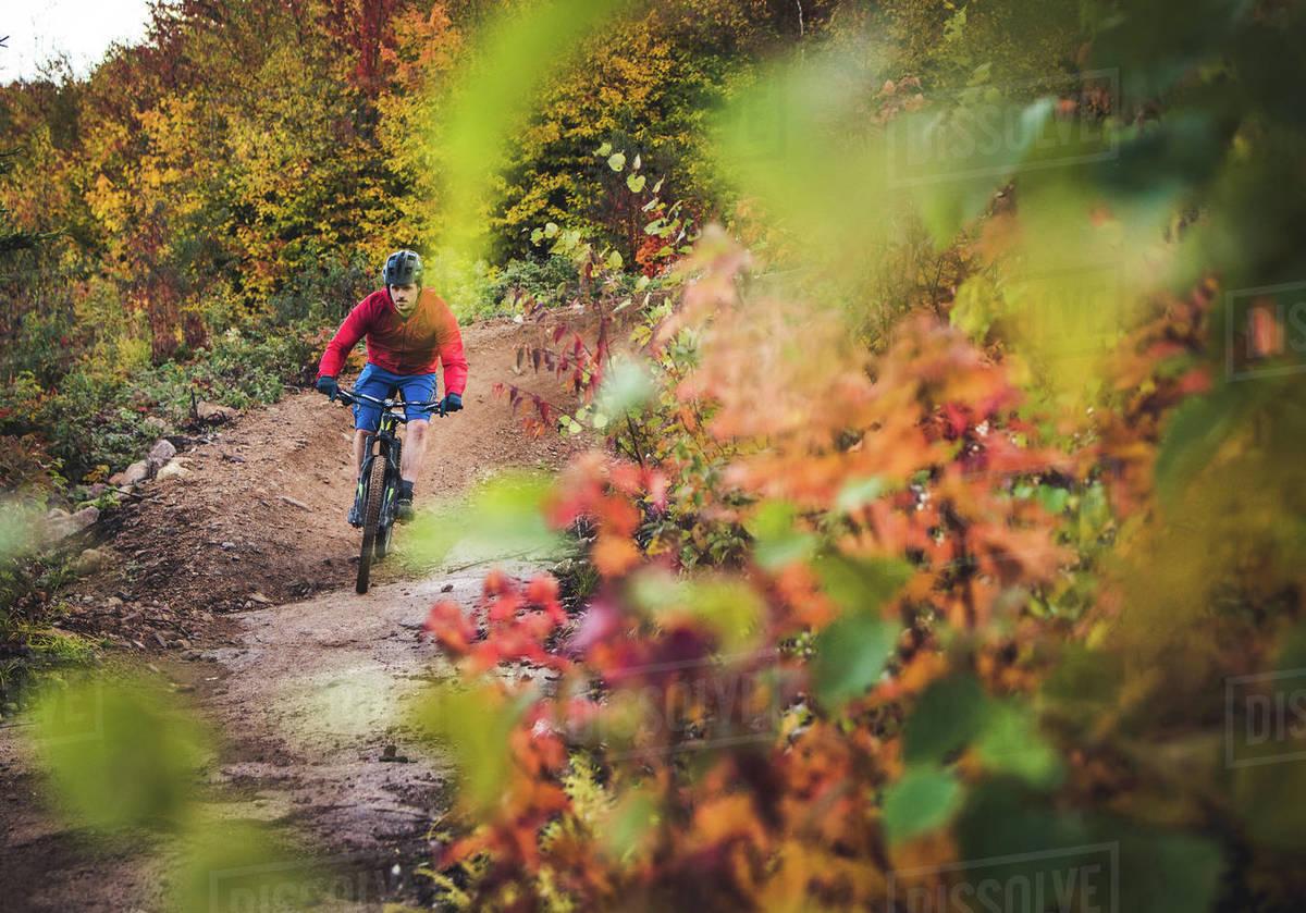 Male mountain-biking downhill during foliage season Royalty-free stock photo