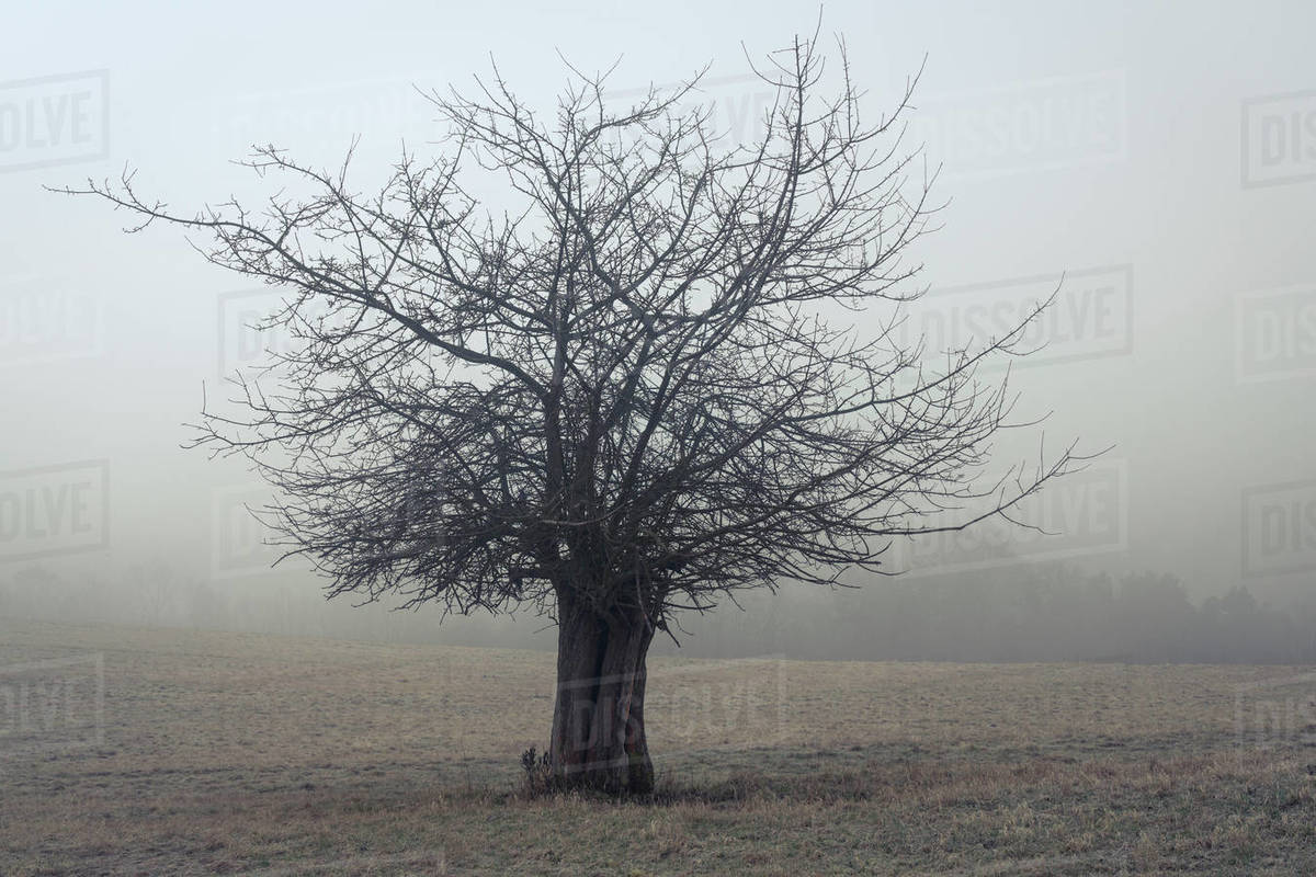 Lone bare tree on field against sky in foggy weather Royalty-free stock photo