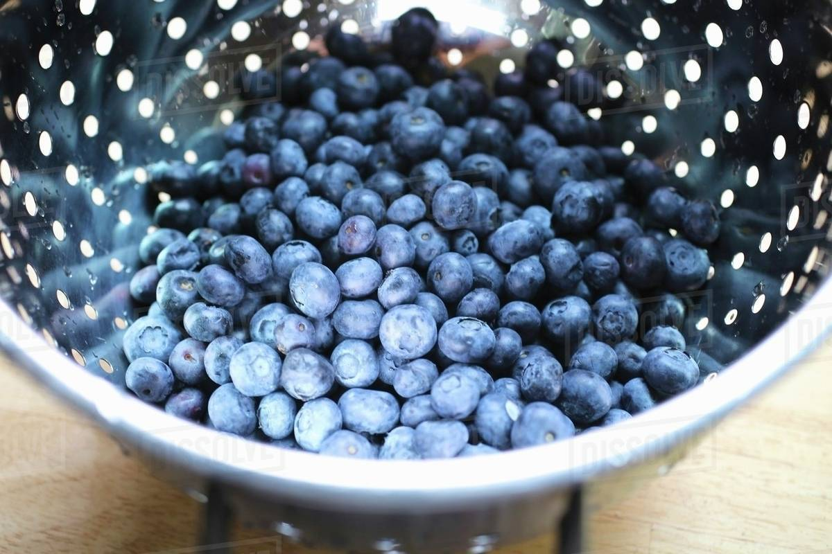 Fresh blueberries in a colander stock photo