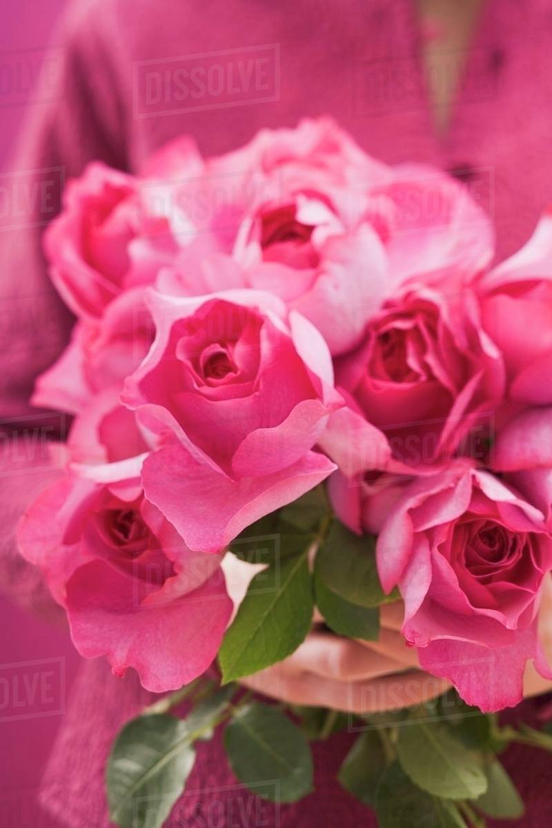 Hands Holding Bunch Of Pink Roses Stock Photo Dissolve