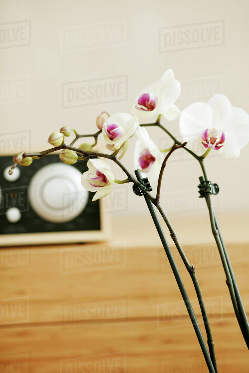 Orchids With Temperature Controller Stock Photo Dissolve