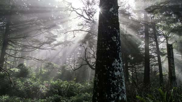 Timelapse of the light rays through the fog on a slider at Hug Point State Park, Oregon. Royalty-free stock video