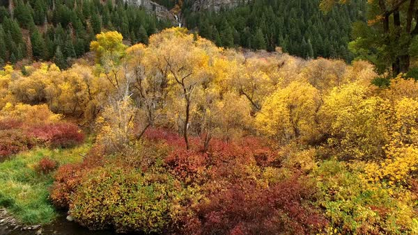 Flying over river through trees in Fall color towards waterfall in Provo Canyon. Royalty-free stock video