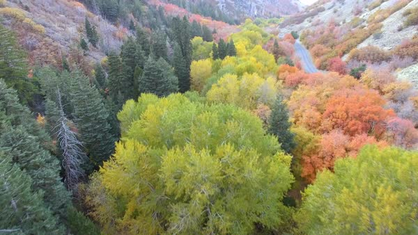 Aerial view flying over colorful treetops during Autumn in Utah. Royalty-free stock video