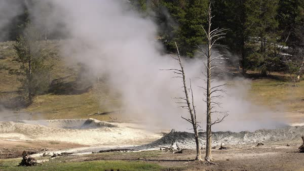 Steam rising from ground next to tree in Yellowstone. Royalty-free stock video