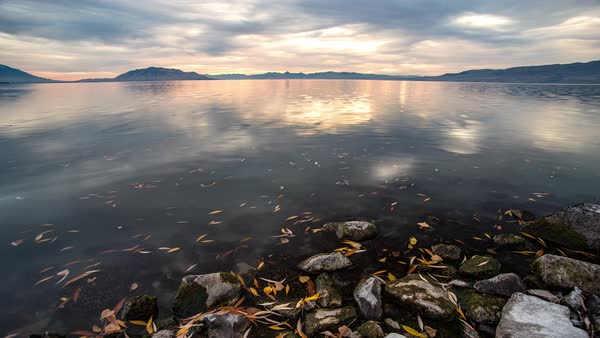 Leaves moving through water current during sunset timelapse overlooking Utah Lake. Royalty-free stock video