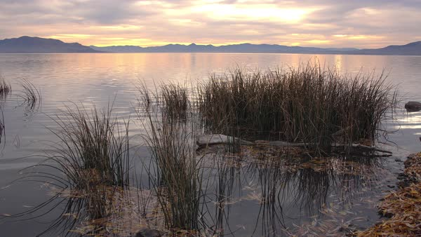 Static view of Utah Lake in the evening from shore viewing past reeds as water ripples slightly. Royalty-free stock video
