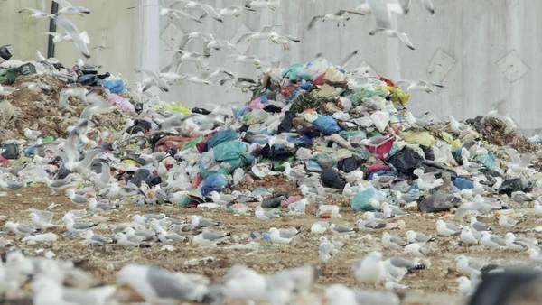 Pan of piles of trash, garbage in huge landfill with seagulls scavenging. Royalty-free stock video