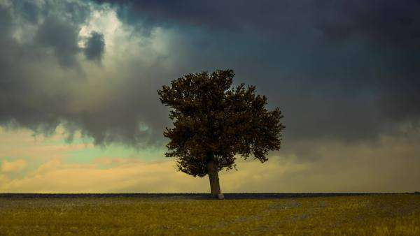 Surreal landscape timelapse of a lonely tree in the middle of a prairie with storm clouds background Royalty-free stock video