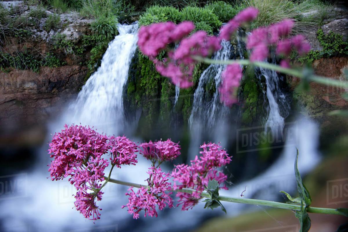 Nature Flower Waterfall Beautiful Wallpaper