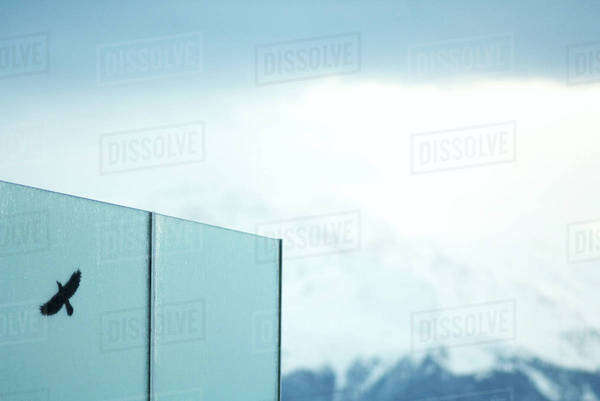 Shadow of bird on wall, snow covered mountains in background Royalty-free stock photo