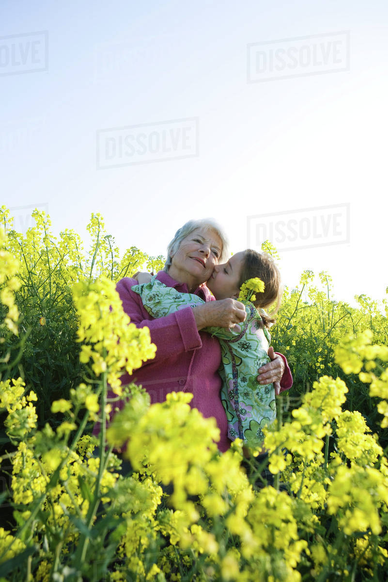 Girl Kissing Grandmother On Cheek Standing In Field Of Yellow