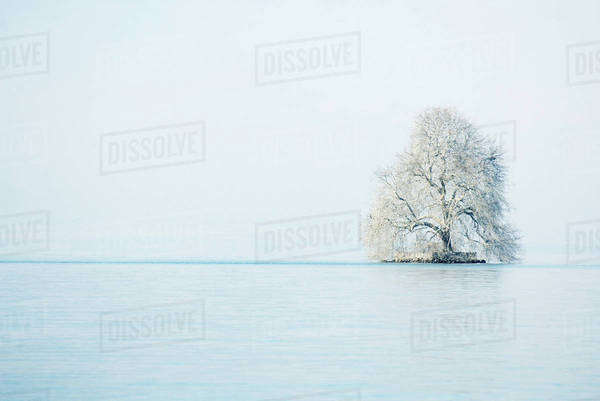 Snow-covered tree in middle of lake Royalty-free stock photo