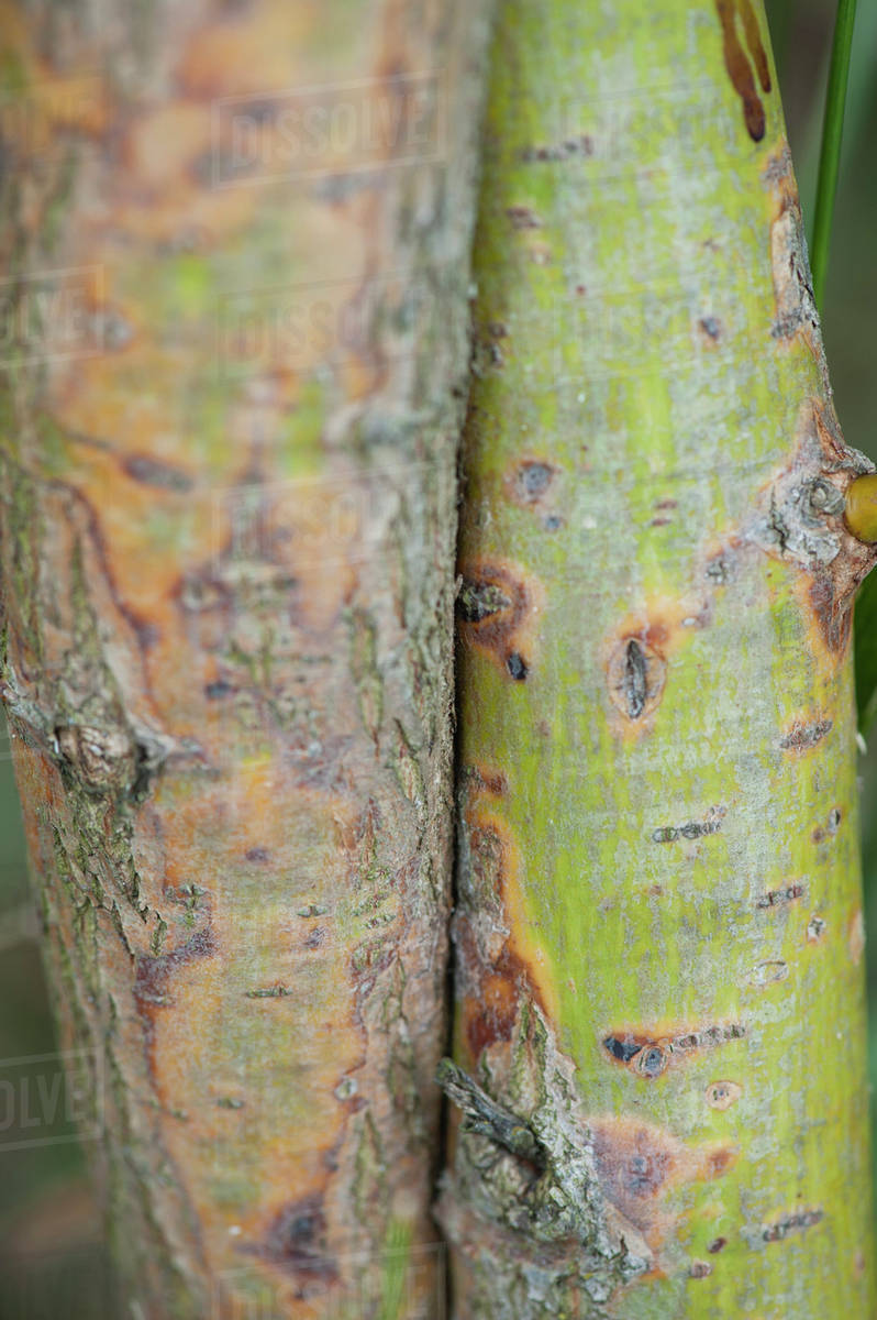 Colorful bark on tree trunks, close-up - Stock Photo - Dissolve