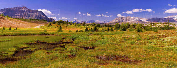 Alpine meadow and a distant mountain range Royalty-free stock photo