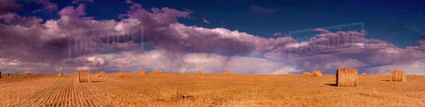 Panoramic shot of flat wheat fields contrasted against cloudy skies in Southern Alberta. Royalty-free stock photo