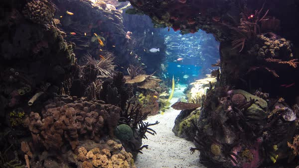 Fishes in Lisbon Oceanarium passing by with corals, Portugal timelapse Royalty-free stock video