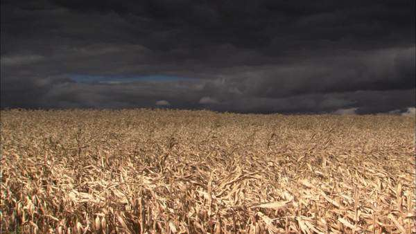 Locked-off shot of corn field with storm clouds Rights-managed stock video