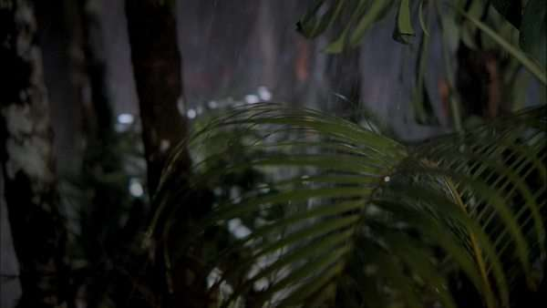 Close-up shot of rain starting to fall on palm leaves in Nepal. Originally sourced from 70mm film Rights-managed stock video