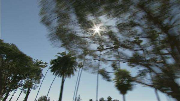 Low-angle shot of palm trees in Santa Monica, California Rights-managed stock video