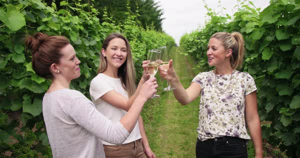 3 young adult women cheersing in vineyard Royalty-free stock video