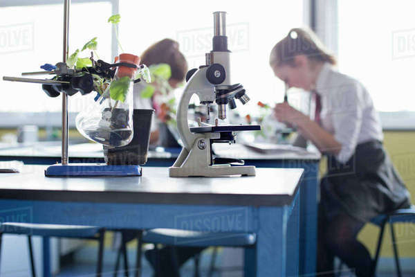 Microscope and plant in beaker in high school science laboratory Royalty-free stock photo
