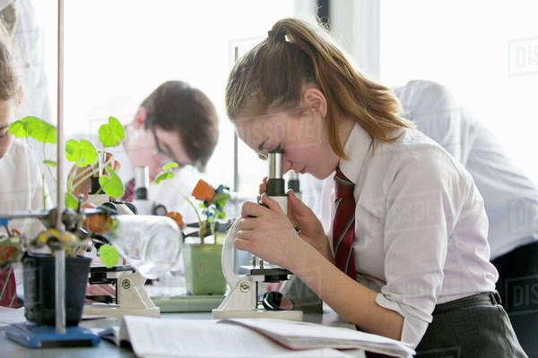 High school student conducting scientific experiment at microscope in biology class Royalty-free stock photo