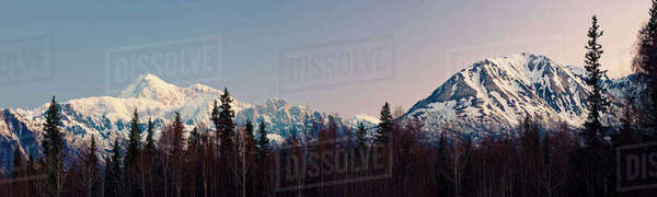 Panoramic View Of Sunrise Over Southside Mount Mckinley And The Alaska Range, Denali State Park, Southcentral Alaska, Spring Rights-managed stock photo
