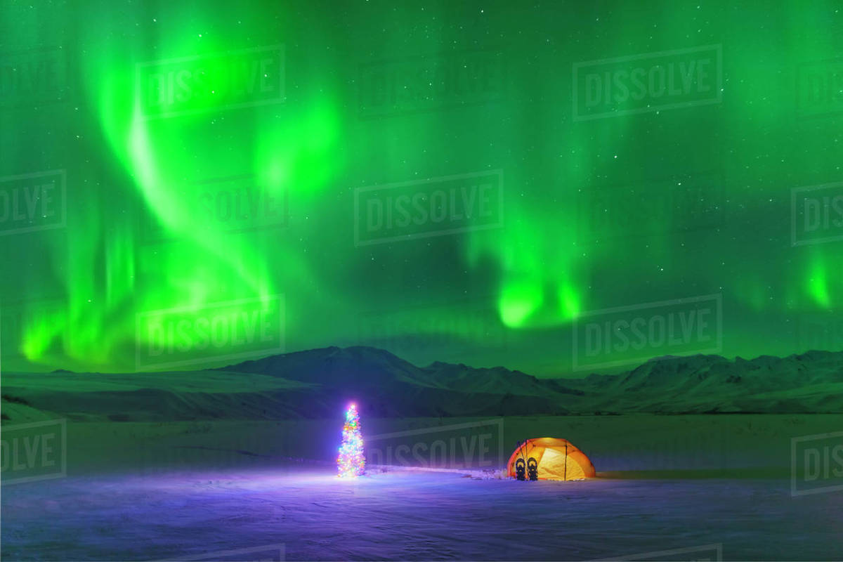 the northern lights glow in the sky above a backpacking tent and christmas tree next to it at twilight alaska range in the distance winter isabel pass