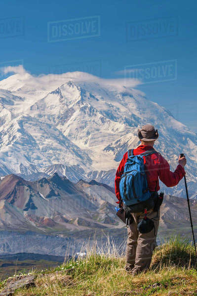 Hiker on a hillside in front of Mt. McKinley and Muldrow Glacier, Denali National Park, Interior Alaska, summer Rights-managed stock photo