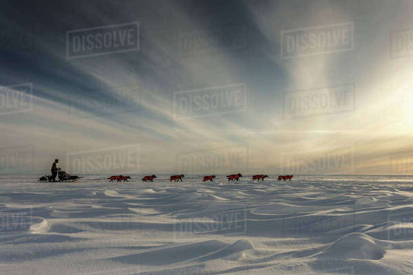 Ken Anderson several miles from the Nome finish line near sunset during Iditarod 2015 Rights-managed stock photo