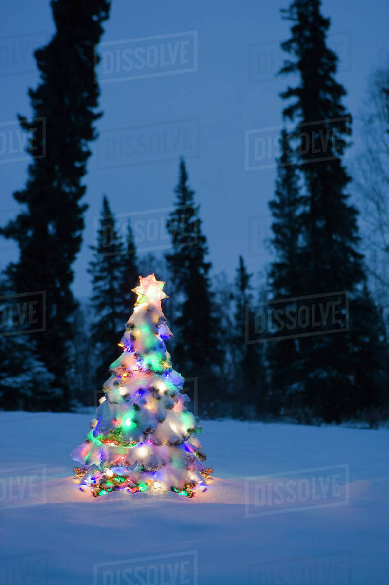 Lit Christmas Tree In Snow Outside During Winter At
