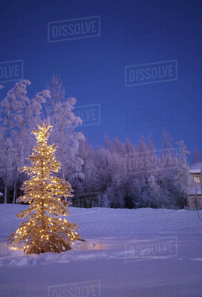 Lighted Christmas Tree Outside Twilight Winter Alaska