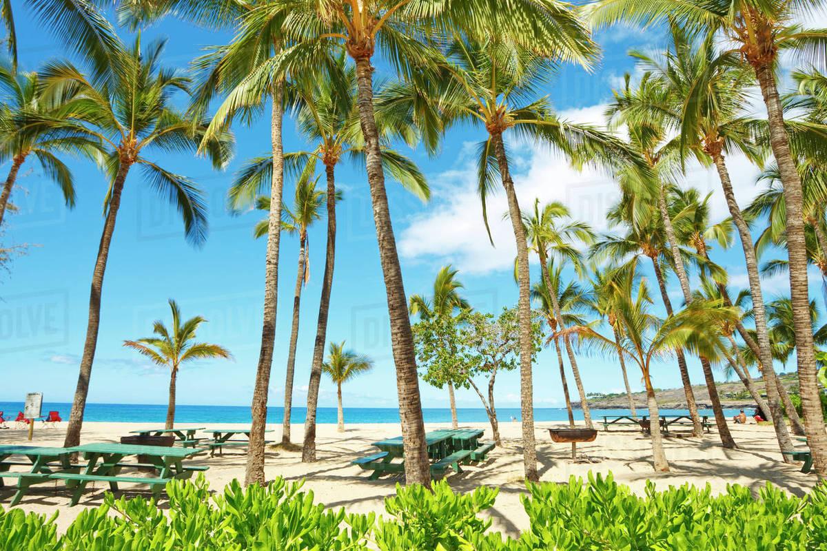 Hawaii Lanai Hulopoe Bay Beach Park Palm Trees And Picnic Tables Along