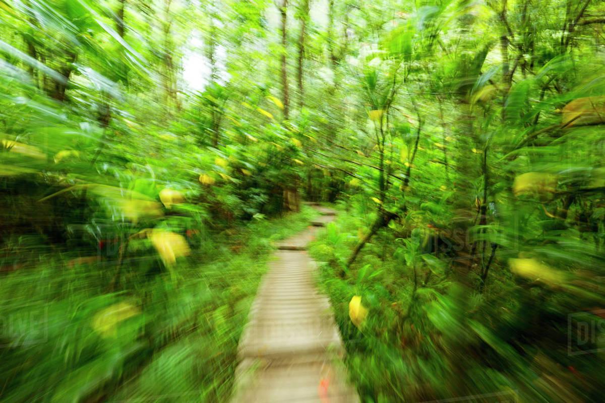 Hawaii, Maui, Kipahulu, Haleakala National Park, Boardwalk Through Lush  Jungle On The Pipiwai Trail stock photo