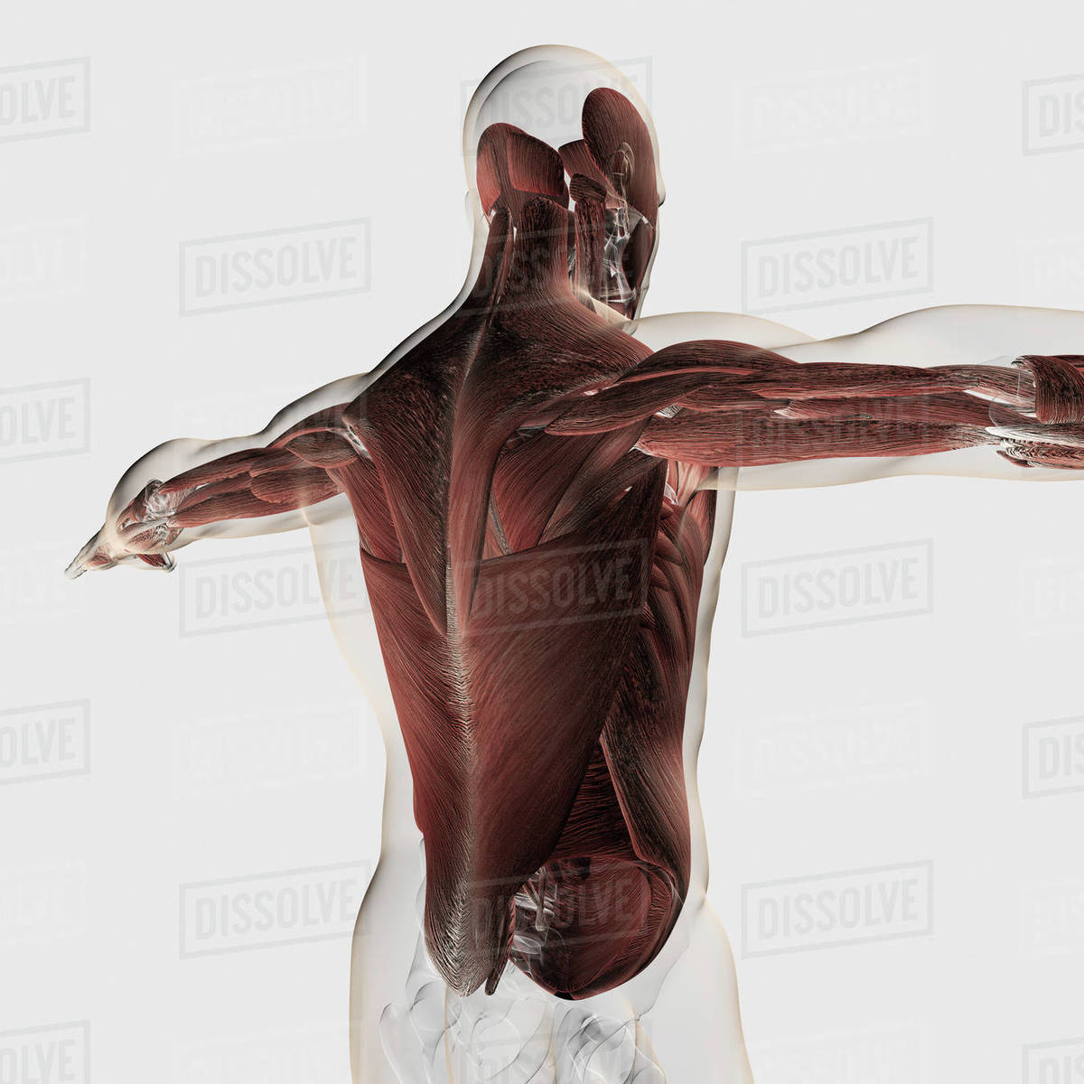 Anatomy Of Human Eye Perspective Stock Photo Dissolve