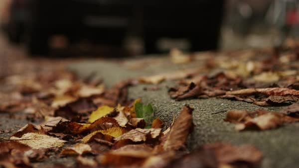 Static shot of autumn leaves on a sidewalk Royalty-free stock video