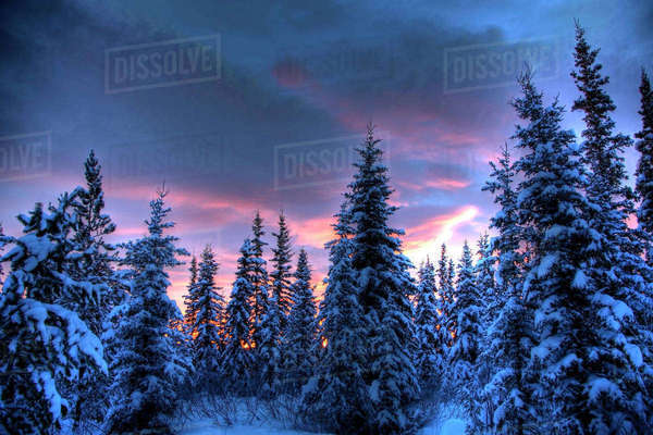 Sunrise lit clouds over trees, teslin, Yukon. Royalty-free stock photo