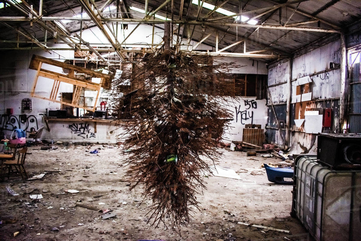 Upside down dead christmas tree hanging in a trashed room . Royalty-free stock photo