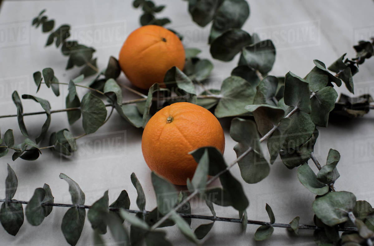 Oranges and eucalyptus on a table Royalty-free stock photo