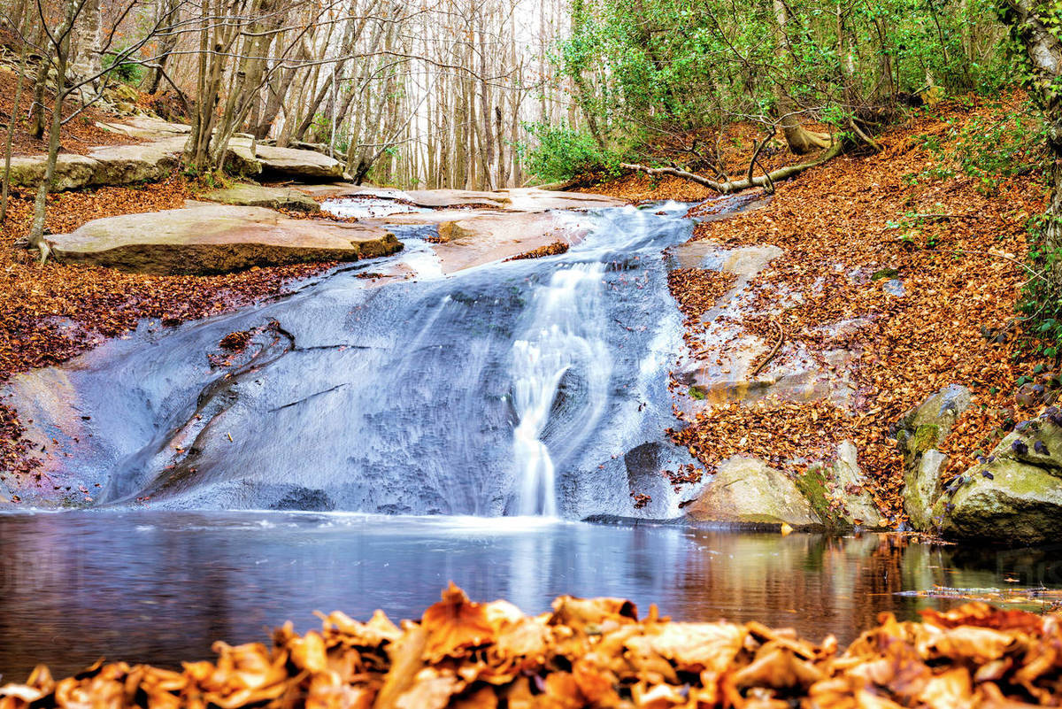 Mountain stream flowing through a forest Royalty-free stock photo