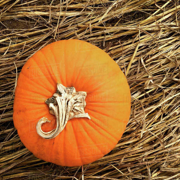 Overhead view of orange pumpkin on hay Royalty-free stock photo