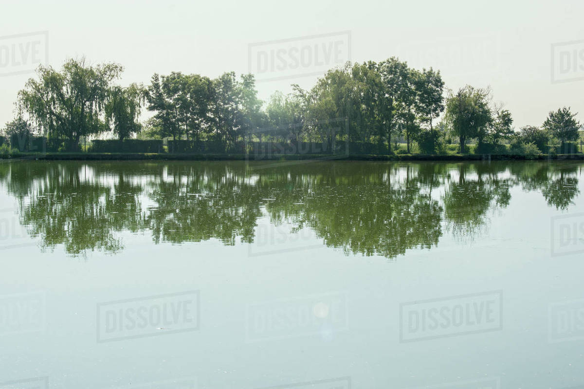 Trees are reflected on the water surface Royalty-free stock photo