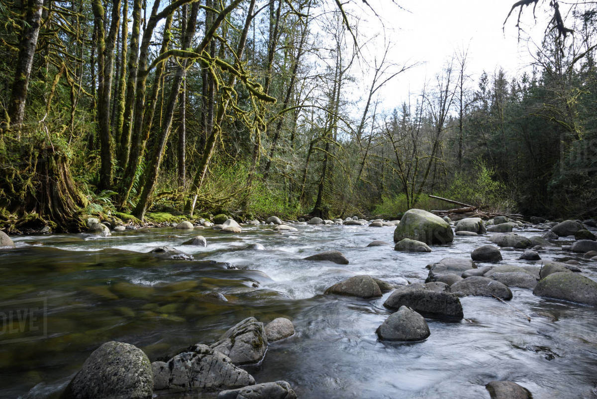 River flowing through the woods Royalty-free stock photo