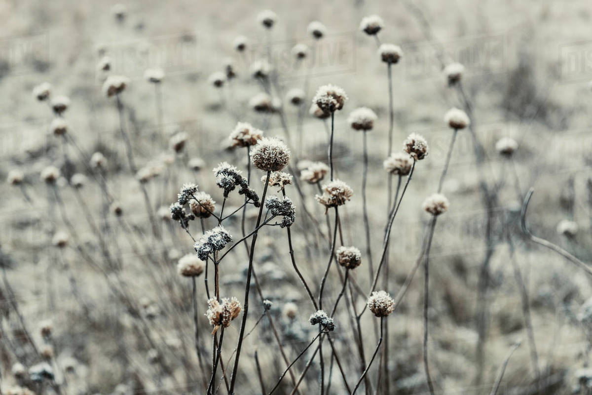 Winter Texture Royalty-free stock photo