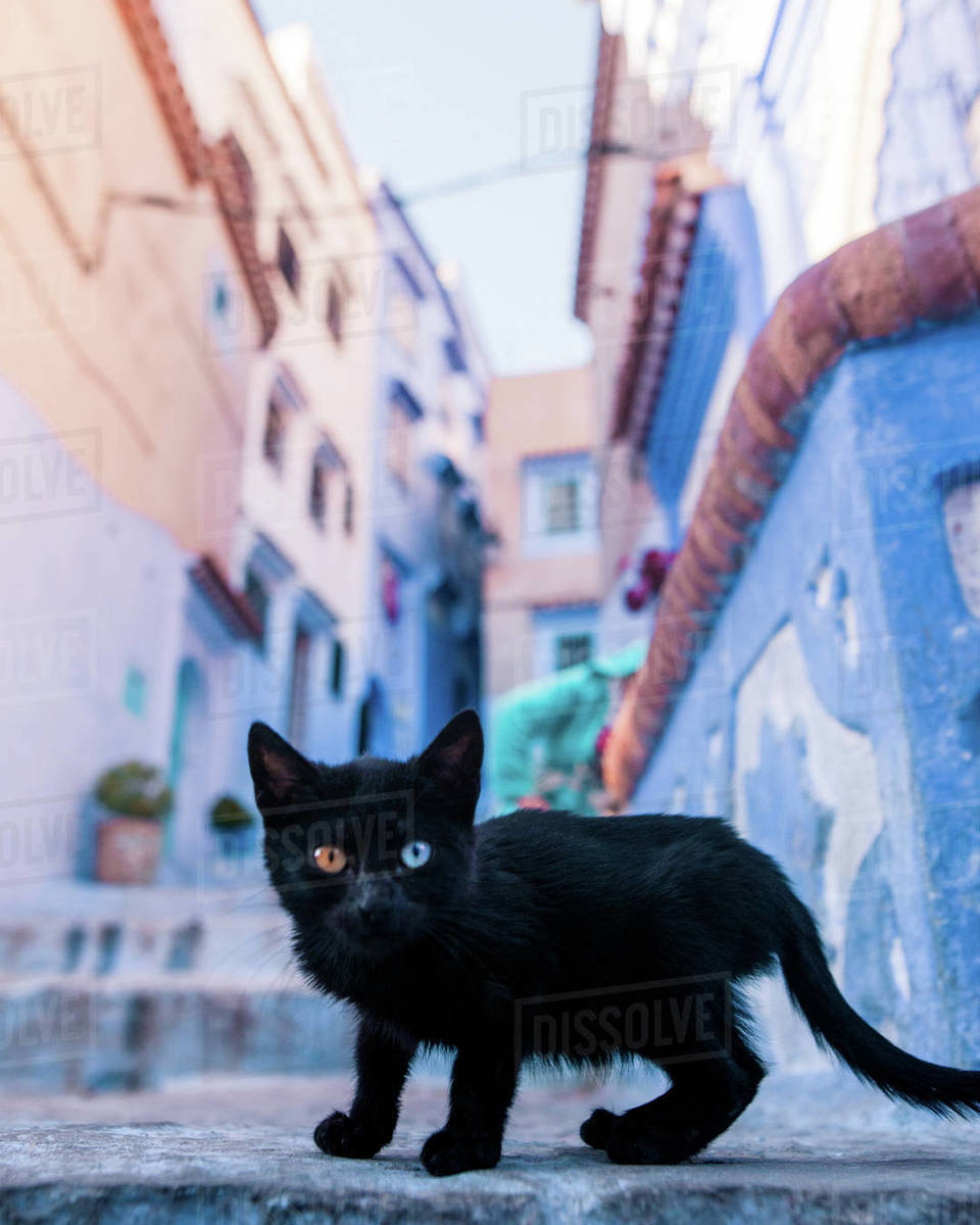 Chefchaouen cat Royalty-free stock photo