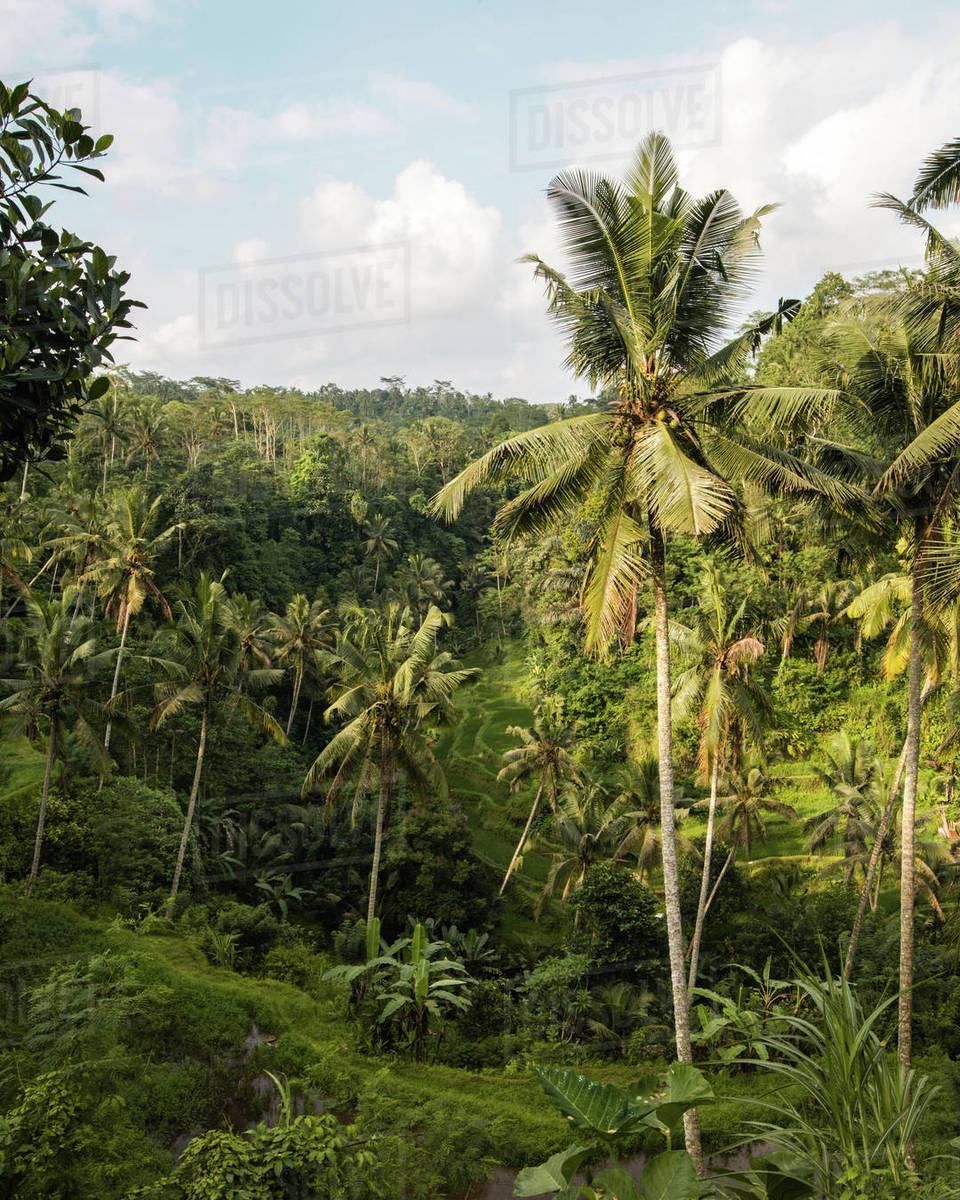 Bali Palm Trees Royalty-free stock photo
